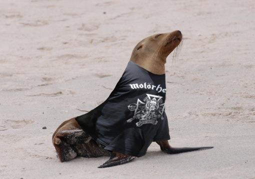 Βόλτα με τους Motorhead πάνω στο κύμα Motorhead_sea_lion1